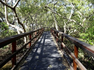 walkway_trail_wooden_pathway_walk_path_hiking-553224